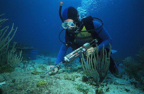 Marine Biology best degrees for todays job market