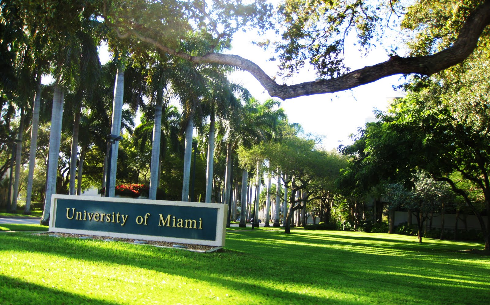 u of miami pinterest