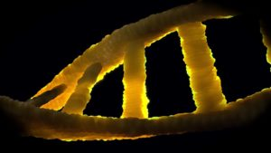 Dns Biology Double Helix Genetic Material Dna 1388692