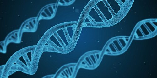 What Degree Does A Genetics Nurse Need