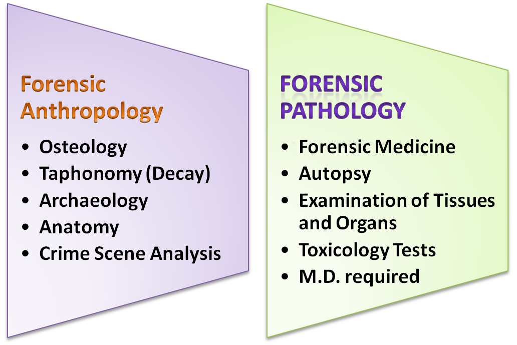 What Is The Benefit Of A Degree In Forensic Anthropology Vs Forensic Pathology