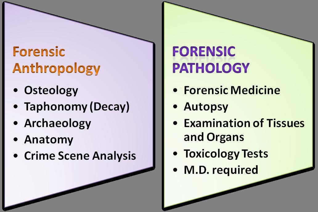 forensics anthrop