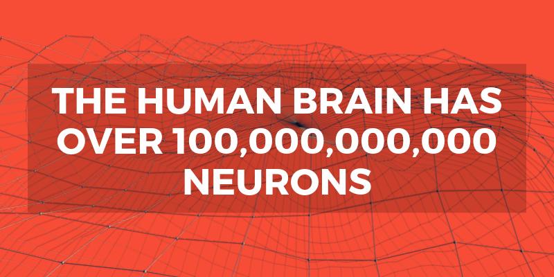 neuroscience1