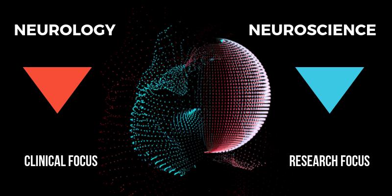 neuroscience4