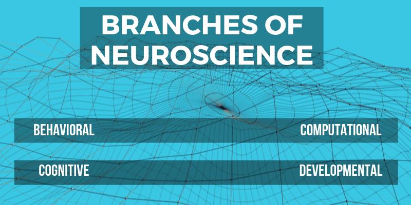 neuroscience5